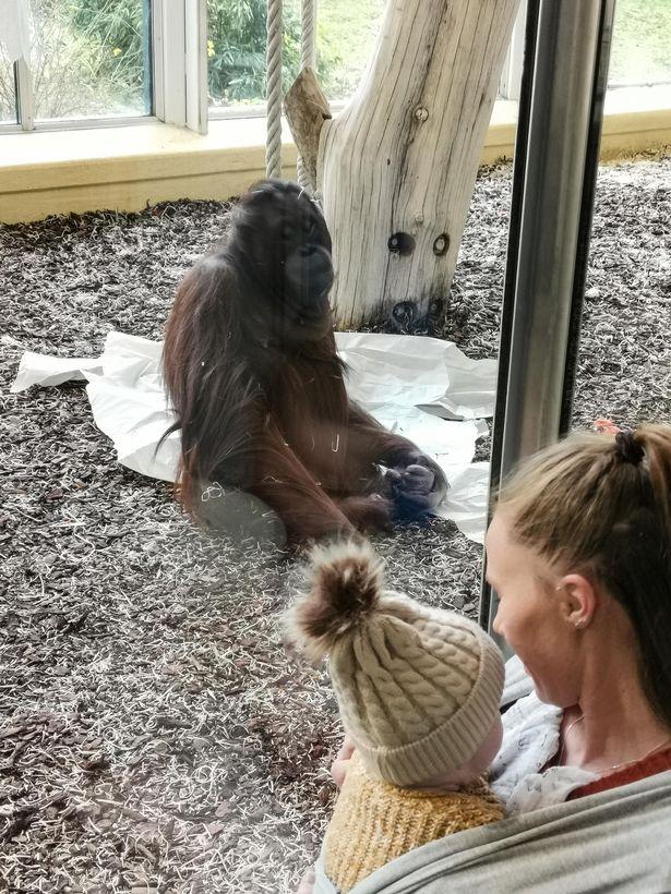 Gemma đưa con trai đi ngắm nhìn sở thú.