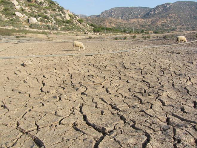 Hiện có 15 hồ thủy lợi tại Ninh Thuận đã khô đáy. (Ảnh qua thanhnien)