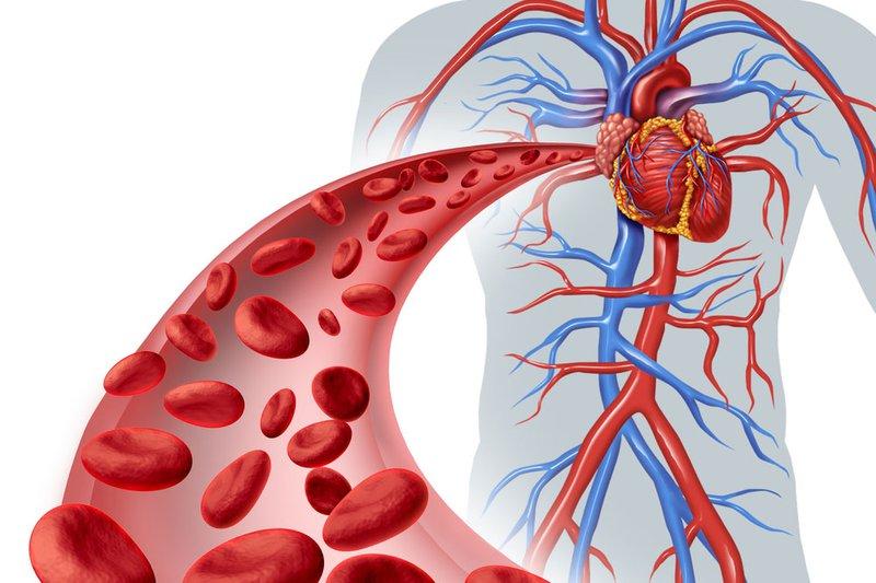 Quá trình co giãn không ngừng của cơ tim tạo ra sự thúc đẩy tuần hoàn máu lưu thông khắp cơ thể.