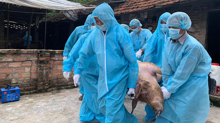 Dịch tả lợn bùng phát, nguy cơ lạm phát vì giá lợn cao - Ảnh 1
