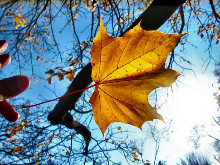 """Vào ngày Mathieu mất, ông ngồi thâu đêm lật và đếm từng chiếc lá rụng, ông nói """"đó là mùa thu, đó là một giấc mơ…"""""""
