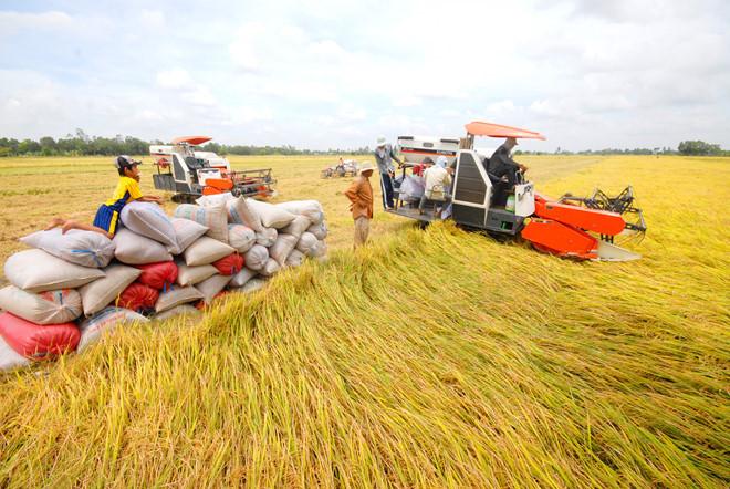Philippines thường mua số lượng lớn gạo từ Việt Nam. (Ảnh qua thanhnien)