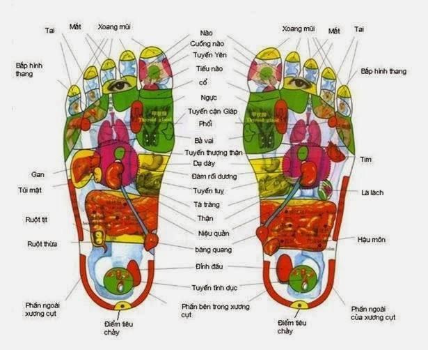 """Một bộ phận của lòng bàn chân phản ứng ra một phần thân thể, đó gọi là """"khu phản xạ""""."""