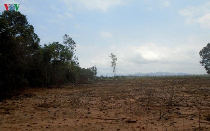 Rừng Tà Cú bị 'đầu độc' để trồng thanh long - Ảnh 3
