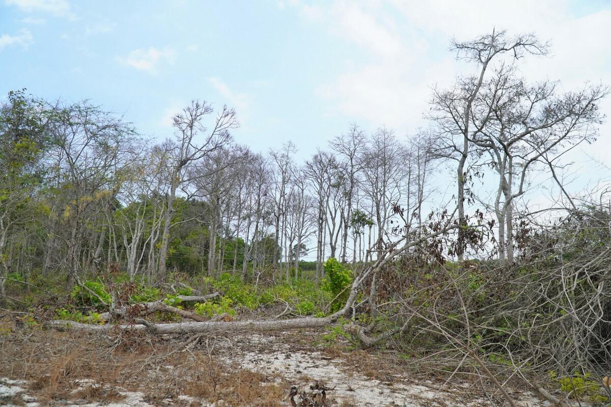 Rừng Tà Cú bị 'đầu độc' để trồng thanh long - Ảnh 2