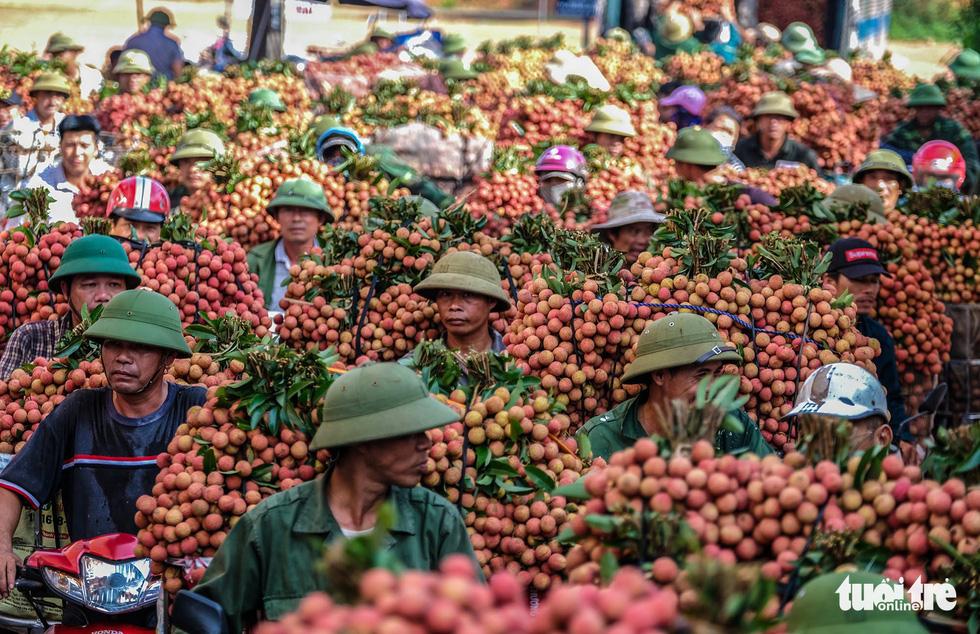 Bắc Giang: Mở đường cho quả vải hội nhập thị trường quốc tế