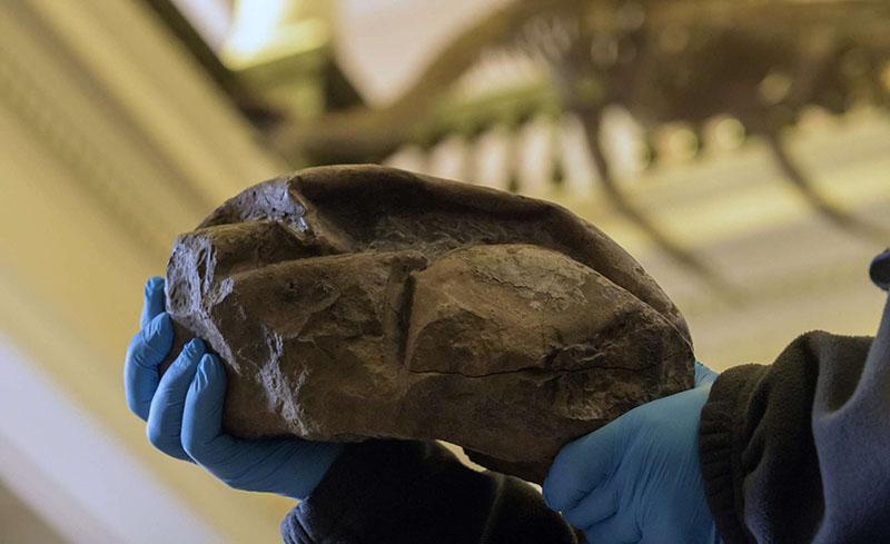 Phát hiện hóa thạch trứng lớn nhất thời đại khủng long 66 triệu năm trước
