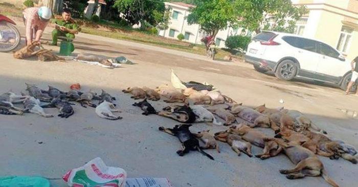 Hơn 30 con chó, mèo bị đánh bả chết. (Ảnh qua vnexpress)