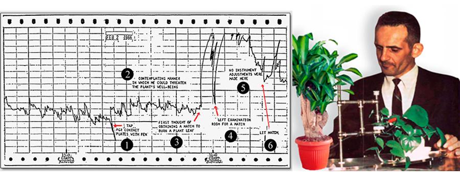 Khoa học chứng minh: Khả năng cảm nhận của thực vật vượt qua cả con người