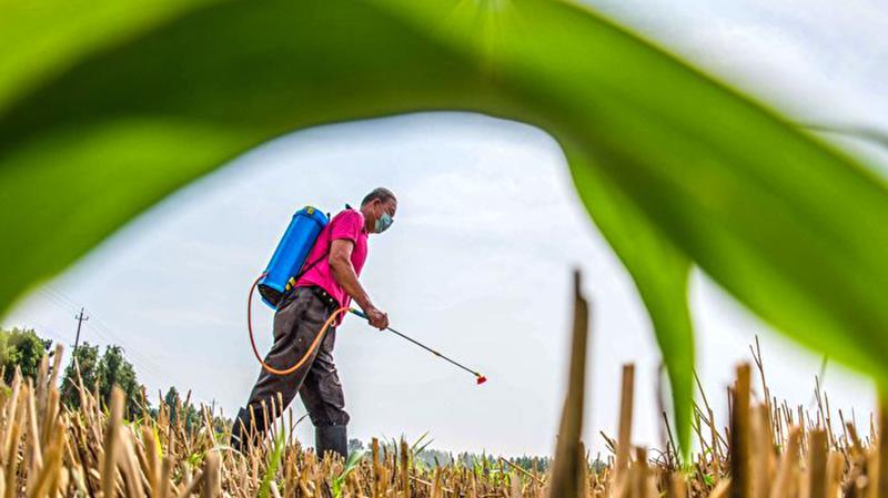 TQ: Kho lương thực ở Quảng Đông chứa 2.500 tấn gạo độc, nghi ngờ đã 'tẩu tán' ra thị trường (ảnh 1)