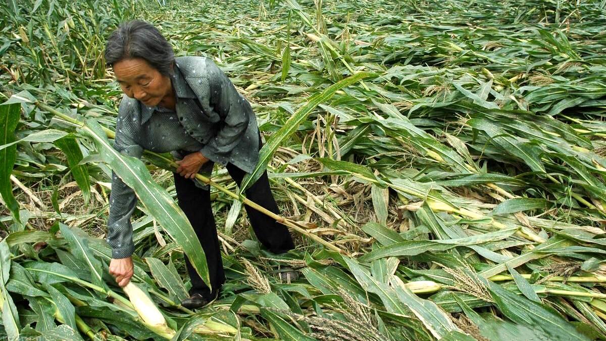 WFP đoạt giải Nobel Hòa bình là lời cảnh báo cho cuộc khủng hoảng lương thực toàn cầu (ảnh 1)