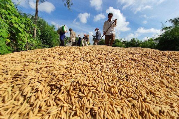 Trung Quốc mua gạo Việt Nam để dùng vào chiến tranh, nhà tù, chứ không ăn