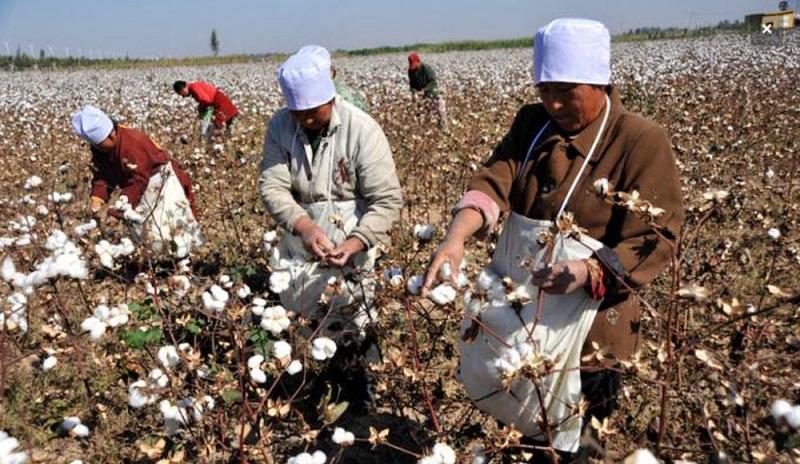 cưỡng bức lao động ở Tân Cương
